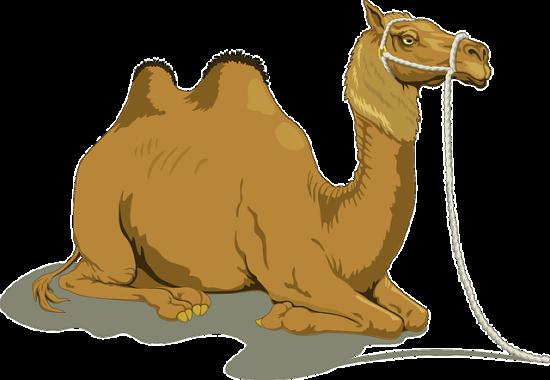 camel-48445_640